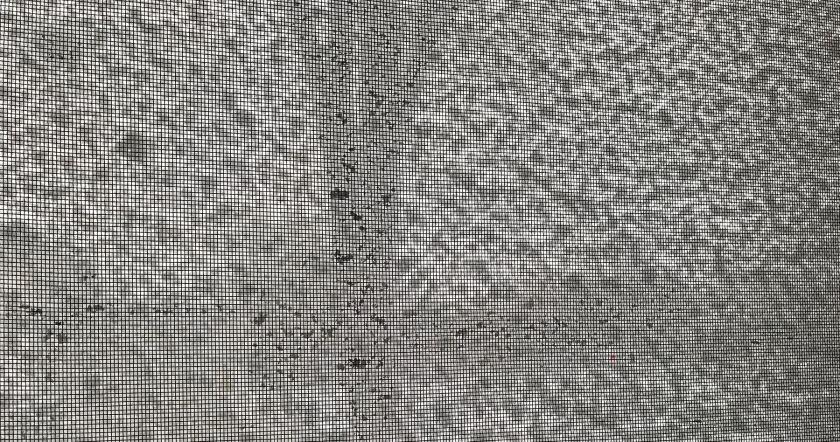 Snow on a screen window