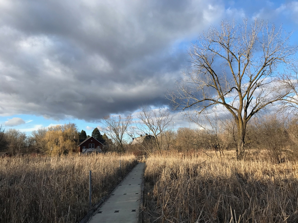 Wetland walkway at Dodge Nature Center in West St. Paul.