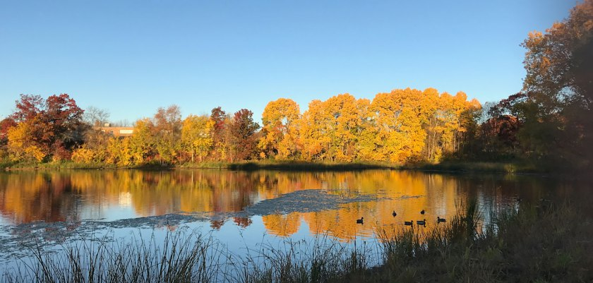 Fall leaves at Thompson Lake in West St. Paul